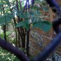 1805-07_Bronx_TUPS_144