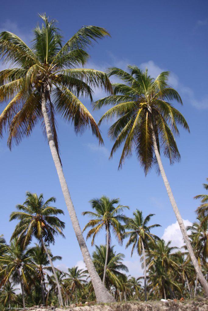 Dominicana2011_028