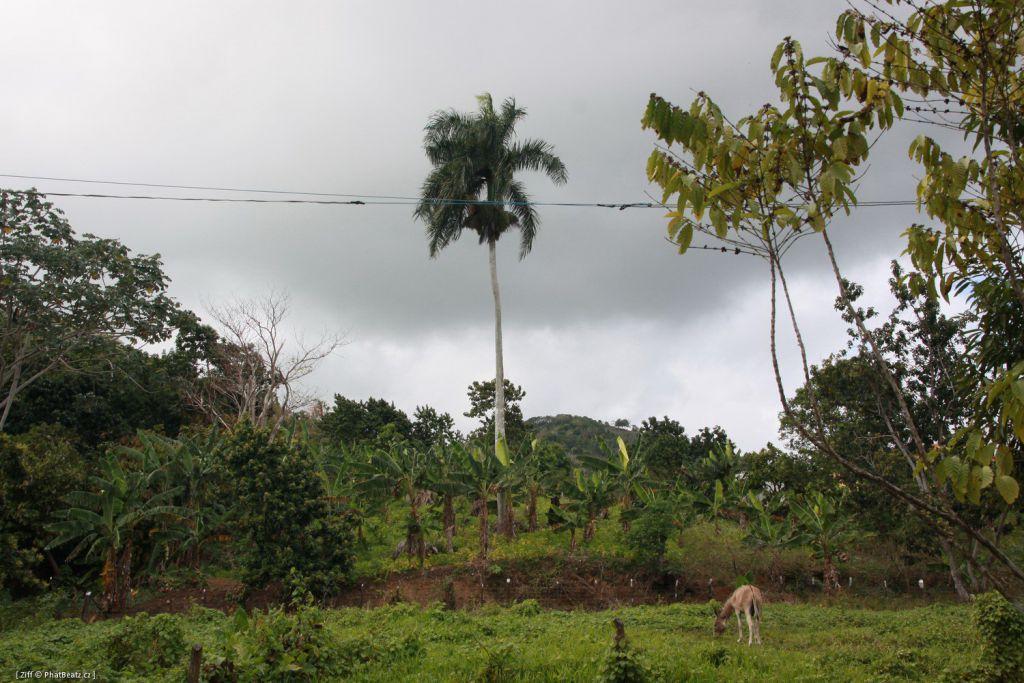 Dominicana2011_085