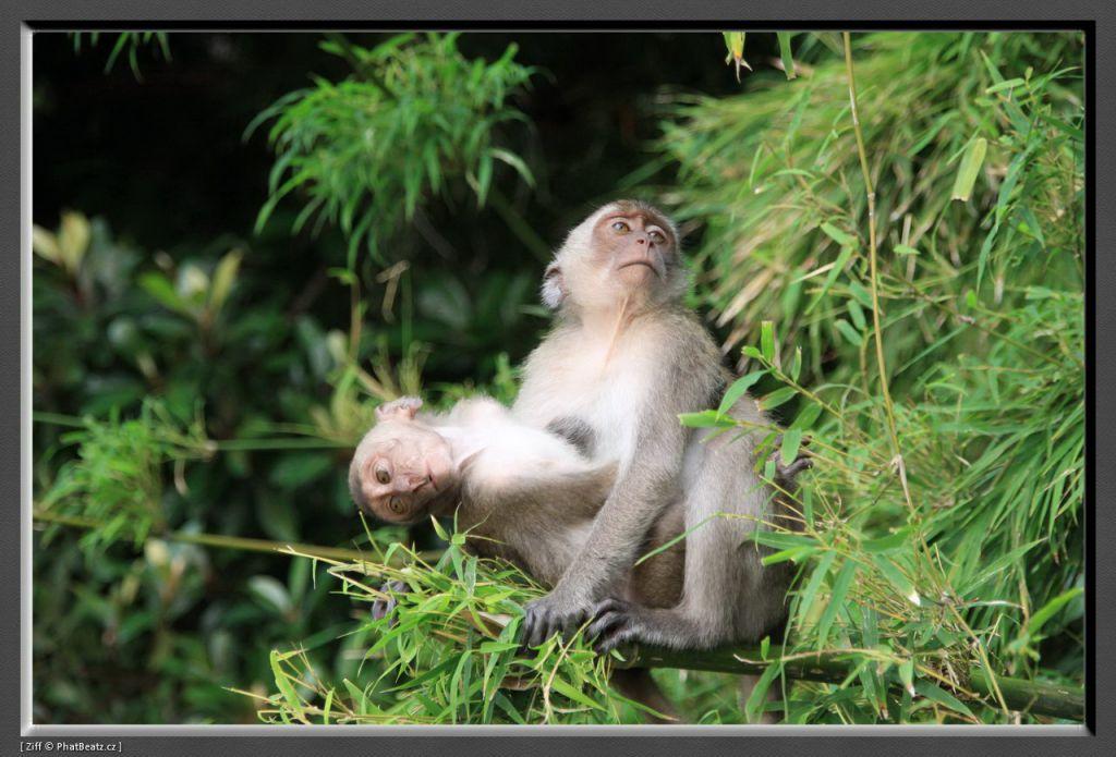 THAILAND2011_026