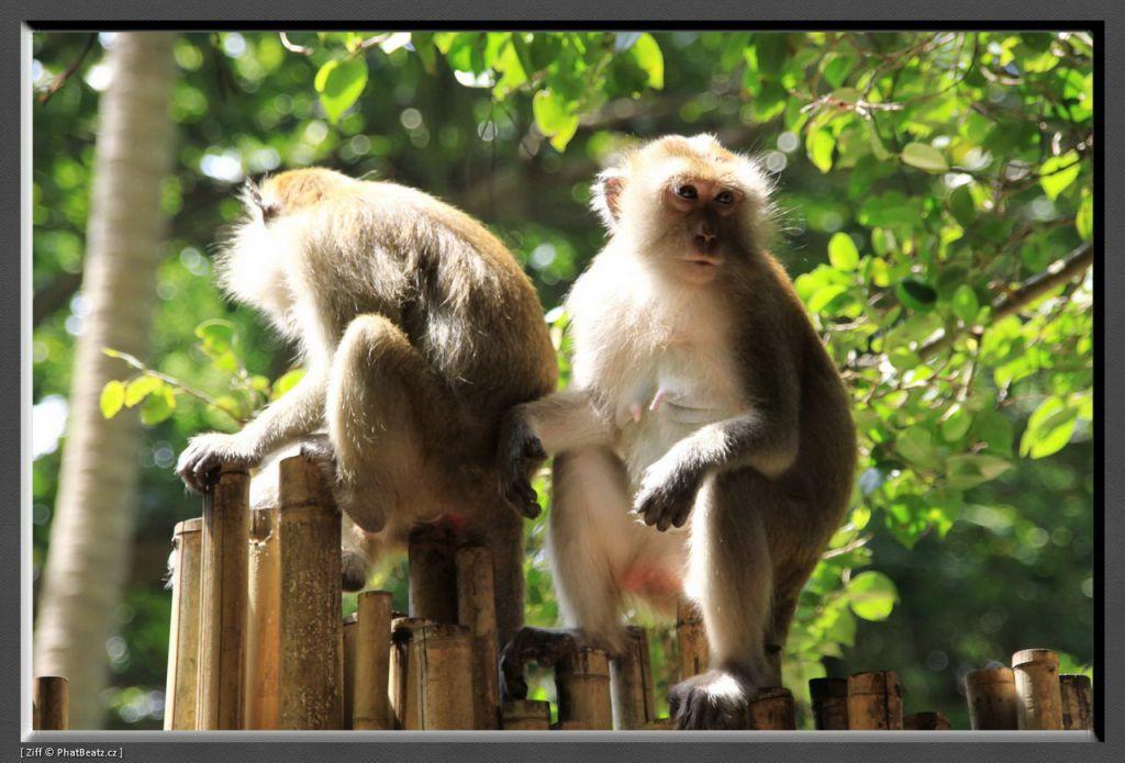 THAILAND2011_050
