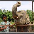 THAILAND2011_160